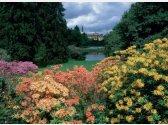 Park w Průhonicach kwitnie